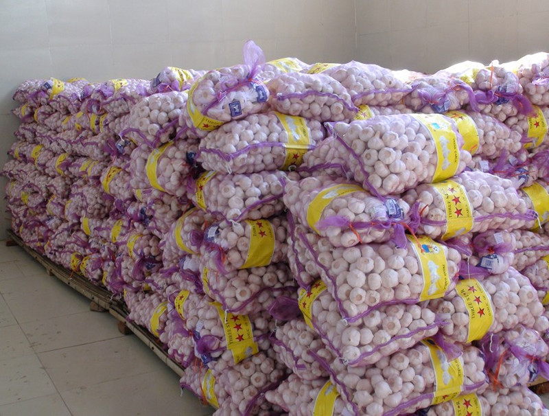 Fresh garlic 10kg/mesh bag