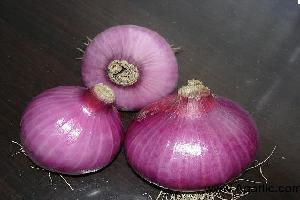 www.agarlic.com onion