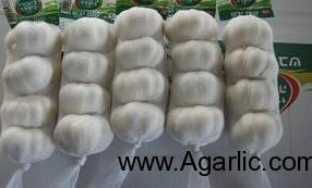 Pure white garlic 4PCS 10kg/carton